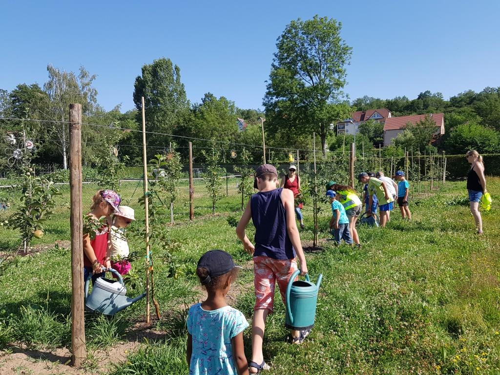 2018 07 02 Visite Ecole Cosswiller Verger Romanswiller09